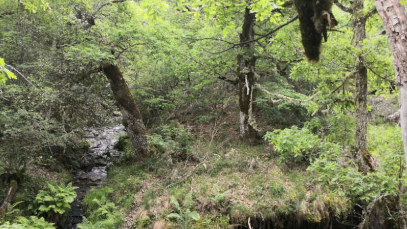 Cascada de la Fervencia 2