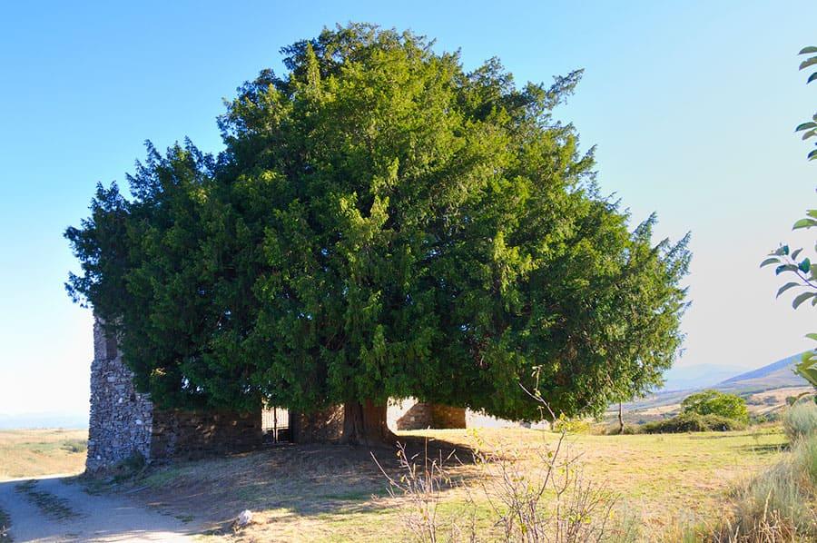 Que Ver en El Bierzo Naturaleza, Tejo San Cristobal